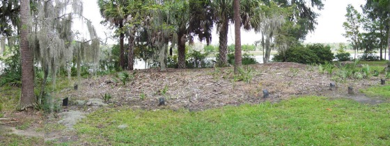 The Garden House site, as it appeared in 2007.  The site had been covered with sand and mulch, and trees had been allowed to grow above, trees whose roots were impacting the remaining walls and foundation of the building.