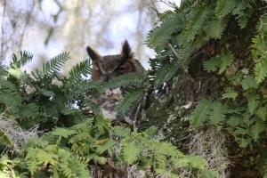 Owl 1 of 3