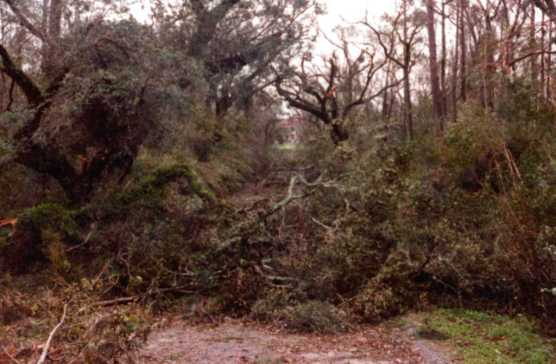 The allee after Hurricane Hugo.